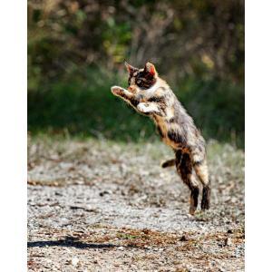"""O """"Pulo do Gato"""" para um bom Sistema de Gestão de Compliance conforme a ISO 37301"""